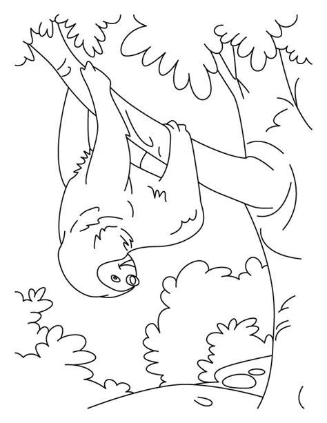 tumbling sloth coloring pages   tumbling