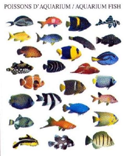 poissons d aquarium