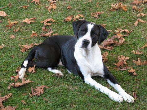 pointer dog names