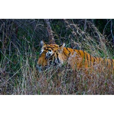 Ranthambore National ParkFootwa