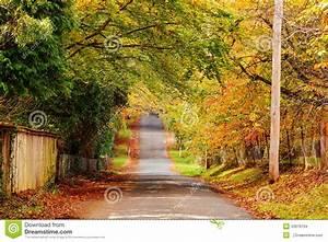 Autumn road scenery stock photo. Image of depicting ...