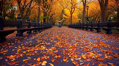 fall computer backgrounds fall wallpaper backgrounds 60 images
