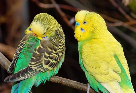 top   parakeet cages  comfortable hygienic cages