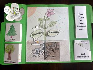 Tour Ii Quarter 1 Science- Botany Lapbook