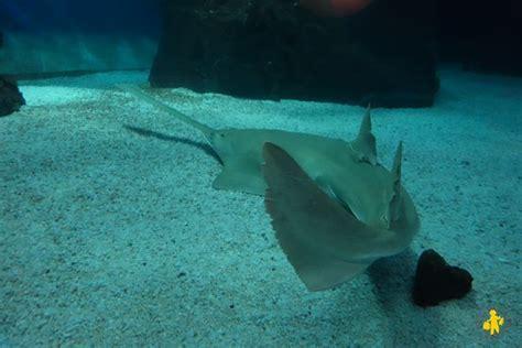 l aquarium de g 234 nes voyages et enfants