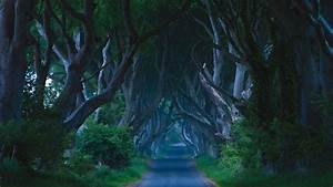 The Dark Hedges - Visit Belfast