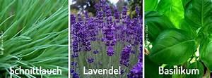 Welche Pflanzen Sind Nicht Giftig Für Katzen : checkliste diese pflanzen sind f r babys und kinder giftig babyplaces ~ Eleganceandgraceweddings.com Haus und Dekorationen