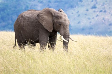 Which Of The 'big 5' Animals From Each Continent Have You