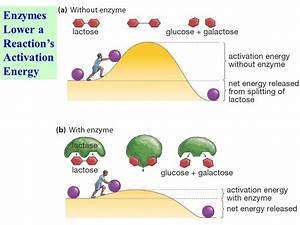 Enzyme Structure, classification and mechanism of action ...