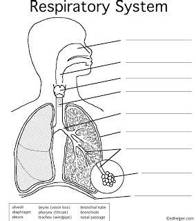 Respiratory System 4 Kids