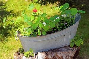Blumen Im November : gartendeko blumen in au ergew hnlichen pflanzgef en ~ Lizthompson.info Haus und Dekorationen