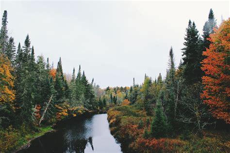 Forest River Scene Wallpaper : High Definition, High ...