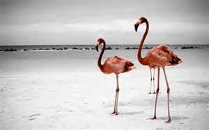 Flamingo Desktop
