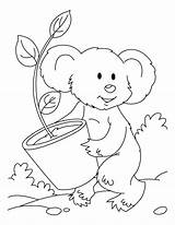 Koala Bear Coloring Pages Printable Plant Eucalyptis Sloth Getcoloringpages Popular Comments sketch template