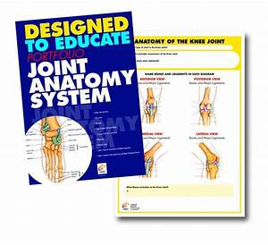 Joint Anatomy Manual  U2013 Chartex Ltd