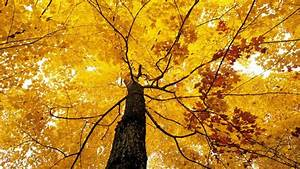 Nature, Tree, Leaf, Autumn, Foliage, Fall, Wallpapers, Hd
