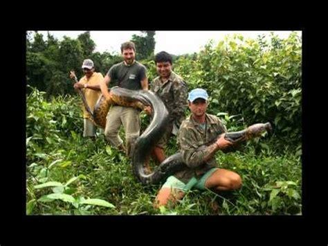 worlds biggest snake  alive   part