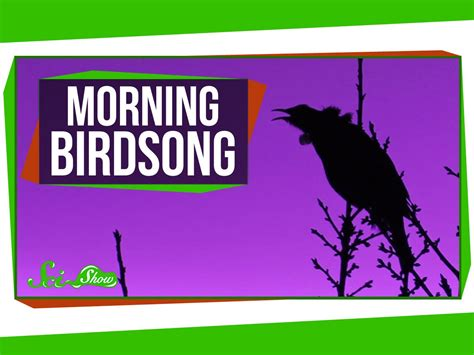 why do birds sing in the morning era observer