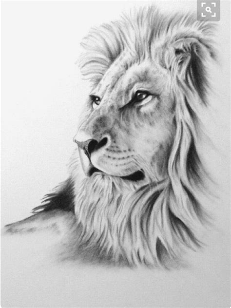 pin  bill gallagher  lions lion drawing drawings