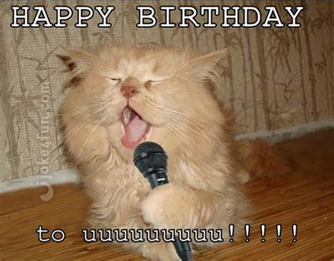 Cat Birthday Memes - 20 cat birthday memes that are way too adorable sayingimages com