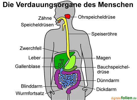 Glucose verdauung