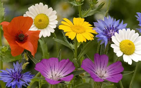 flowers for world s top 100 beautiful flowers images wallpaper photos free download