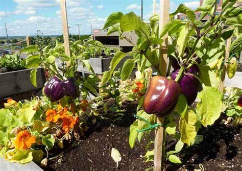 come fare l orto sul terrazzo orto sul terrazzo guida pratica