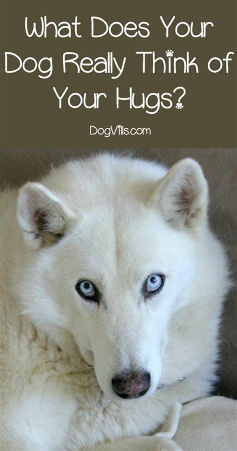 Dog Behavior Explained: Do Dogs Like Hugs? - DogVills