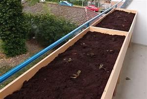 Erdbeeren Pflege Balkon : erdbeeren auf balkon hochbeet sonneneinstrahlung ~ Lizthompson.info Haus und Dekorationen