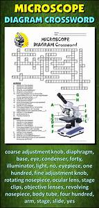 Male Reproductive System Crossword With Diagram  Editable