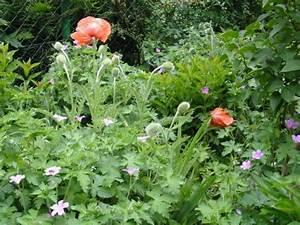 Garten Mohn Sorten : fotogalerie fotos aus unserem privatgarten sommerpflanzen ~ Michelbontemps.com Haus und Dekorationen