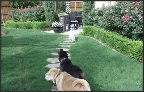 muddy backyard solutions dogs 2017 2018 best cars reviews