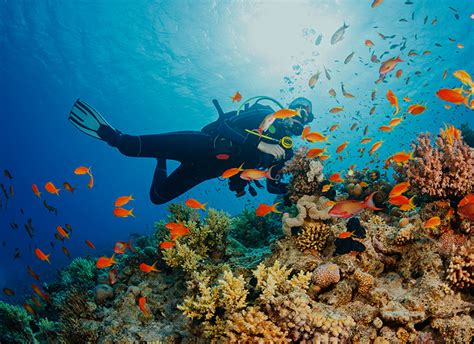 Marine Biologist. Medical Records Certificate Plumber Katy Tx. Car For Sale In Dayton Ohio Build A Websites. Best Time For African Safari. Highest Paid Medical Professions. English Taught Universities In Europe. Tarkett Vinyl Flooring Installation. Practical Administrative Solutions. Small Business Online Community