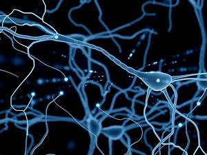 Neurons  What Are They And How Do They Work