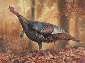 turkey painting by hans droog