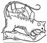 Opossum Mamma Joeys Largest Version sketch template