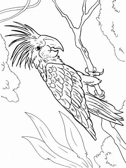 Macaw Coloring Pages Printable Birds Getcolorings Recommended