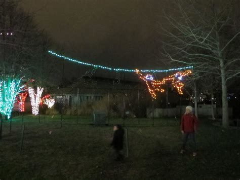 wild lights at the zoo