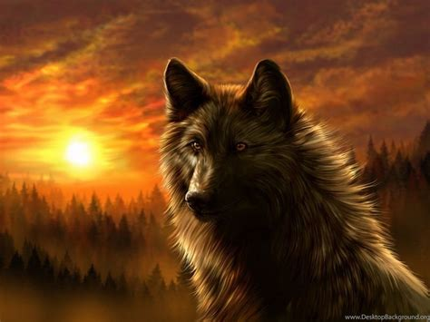Cool Animal Wallpapers Wolf - cool animal wallpapers wolf desktop background