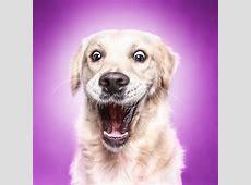 Funny Dog Faces – Erblickencom