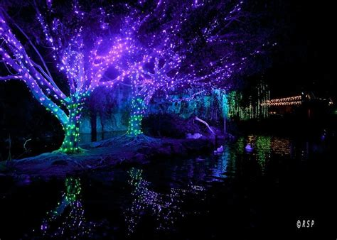 the best places to see holiday lights in los angeles axs