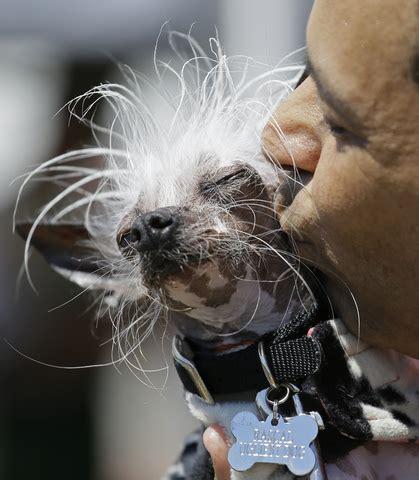 photos world s ugliest dog contest 2017 v1 news gallery