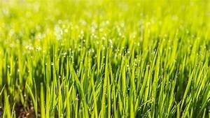 Wie Lange Dauert Es Bis Rasen Wächst : nach der aussaat wie lange dauert es bis der rasen w chst wohnen ~ Frokenaadalensverden.com Haus und Dekorationen