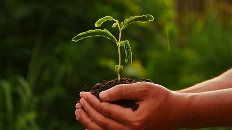Plant,agriculture,seed,seeding,tree,forest, Male Hand