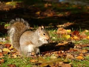 ecureuil en automne votre avis