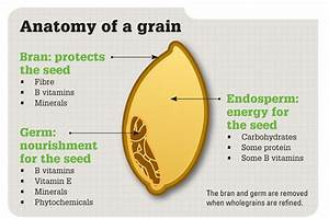 All About Grains  Here U0026 39 S What You Need To Know