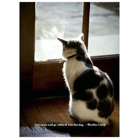 pet sympathy cards  microsoft publisher