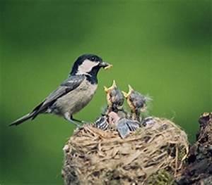 Science in the Backyard—Nesting Birds - KIDS DISCOVER