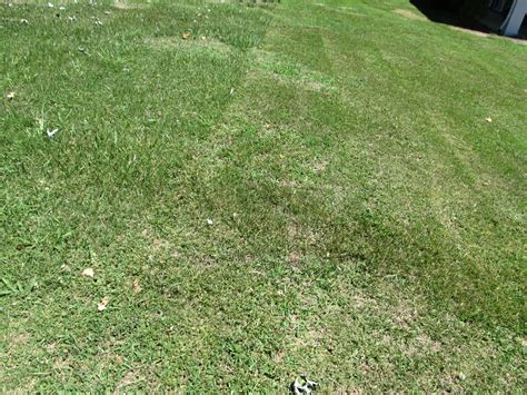 Seasonal Mowing Height Of Home Lawns