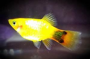 282 best images about Aquarium Fish on Pinterest | Fresh ...